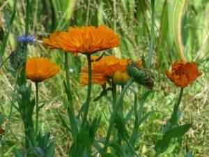 Blumen im Garten der Ferienwohnung